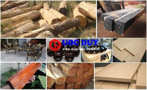 Các loại gỗ được ưa chuộng nhất hiện nay trong ngành nội thất